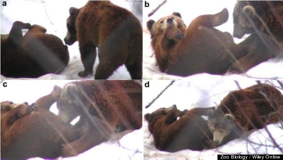 These Bears Are Getting Way More Blow Jobs Than You